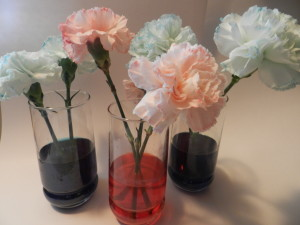 How to Dye Carnations