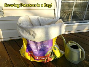 Growing Potatoes in a Bag!